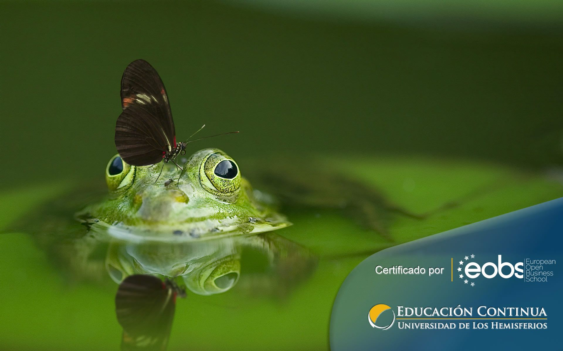 Certificación en Gestión Ambiental