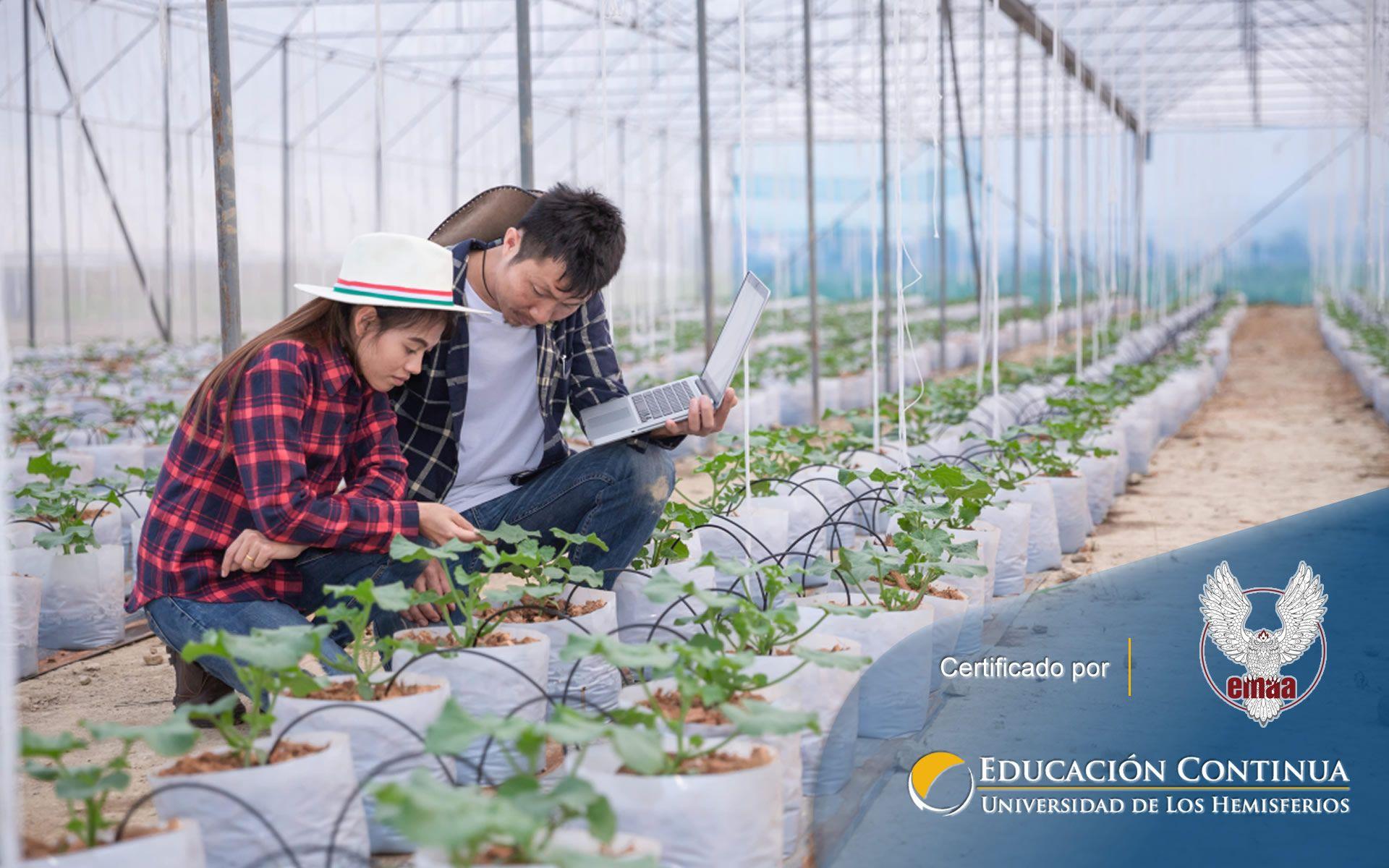 Certificación en Desarrollo Comunitario en el Contexto Agropecuario