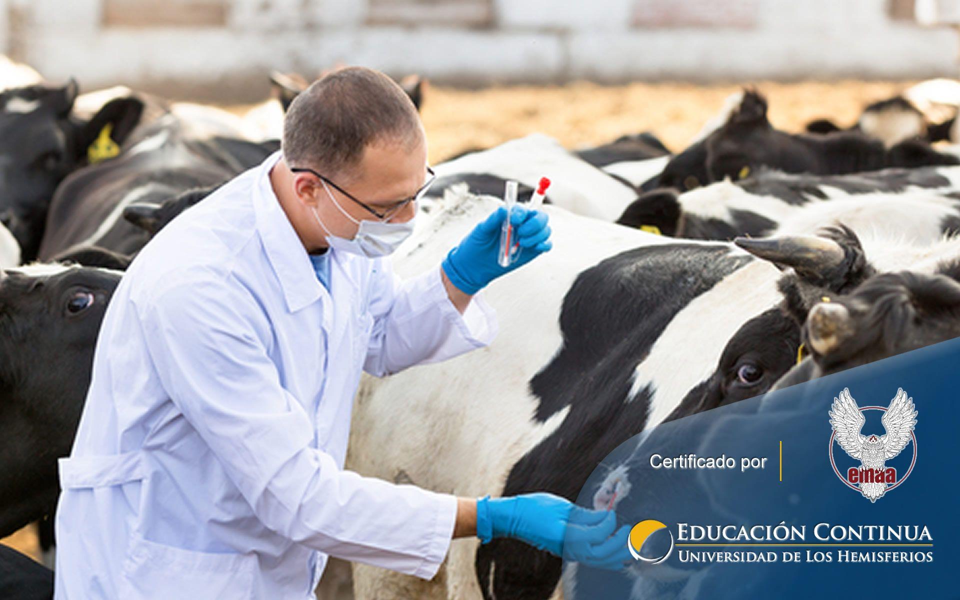 Certificación online para Seguridad Alimentaria Vs Resistencia Antimicrobiana