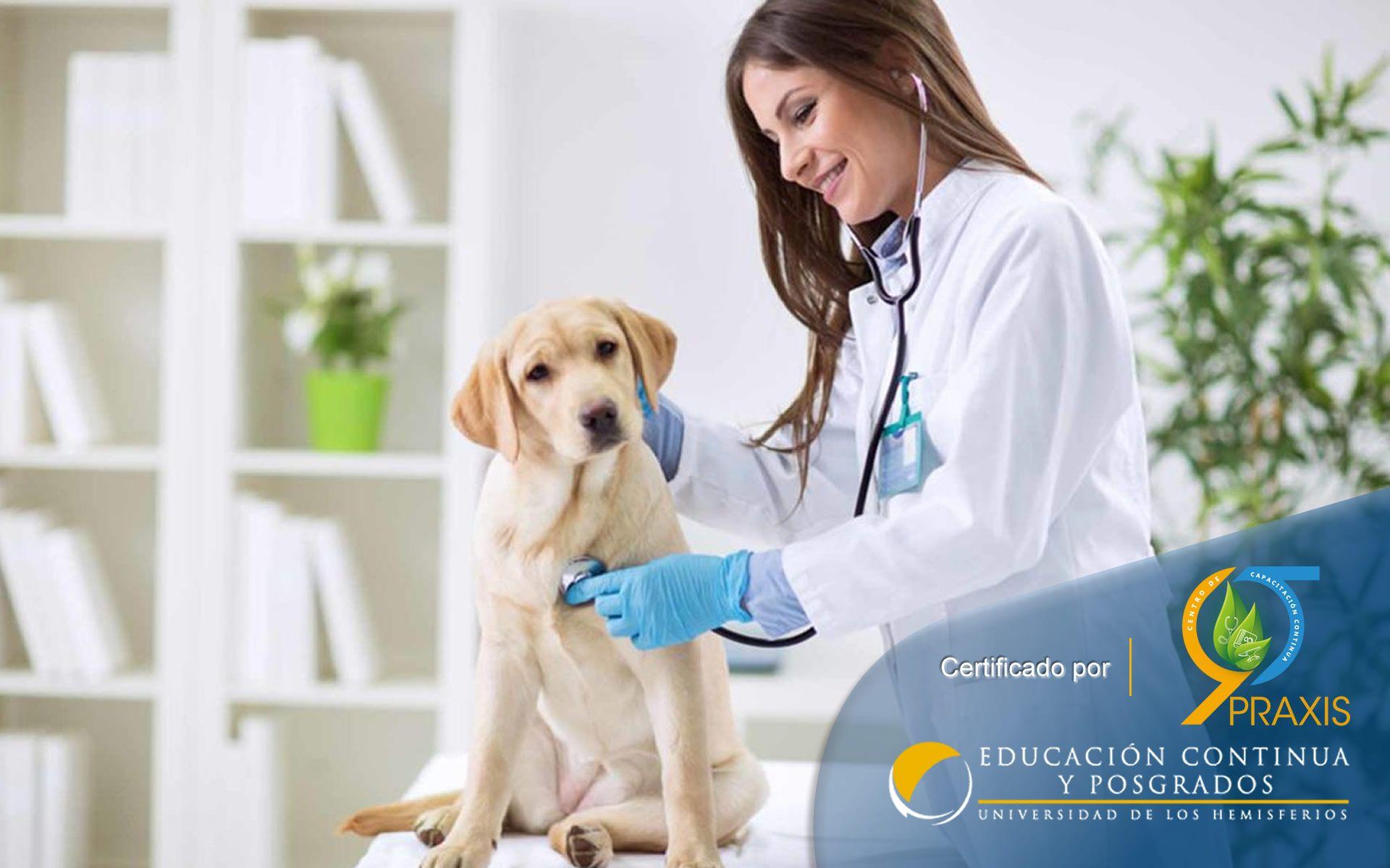 Certificación en Auxiliar en Veterinaria